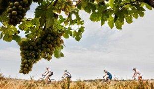 Cyklistika a víno: jak si obojí užívat bezpečně